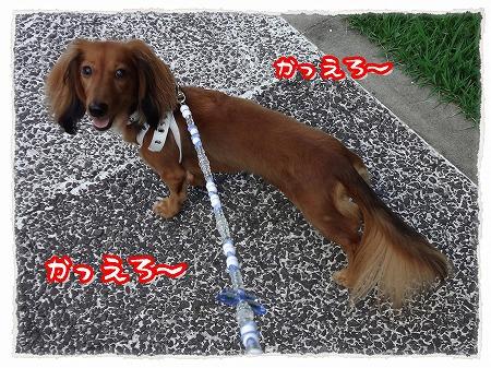 2012_9_18_6.jpg