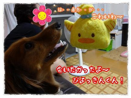 2012_9_1_6.jpg