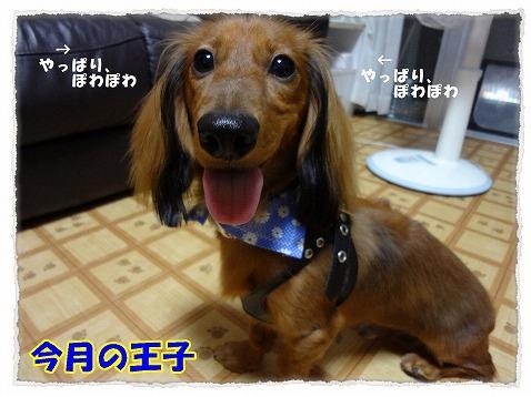 2012_9_20_2.jpg