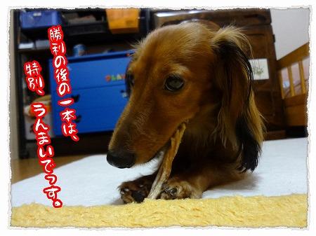 2012_9_21_7.jpg