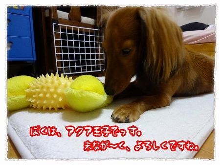 2012_9_22_2.jpg