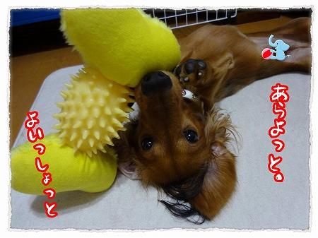 2012_9_22_3.jpg