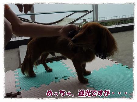 2012_9_23_6.jpg