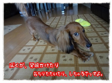 2012_9_24_4.jpg