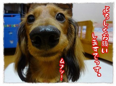 2012_9_24_8.jpg