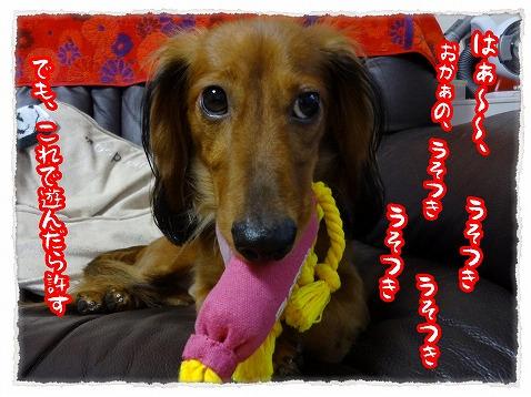 2012_9_26_2.jpg
