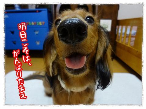2012_9_27_1.jpg