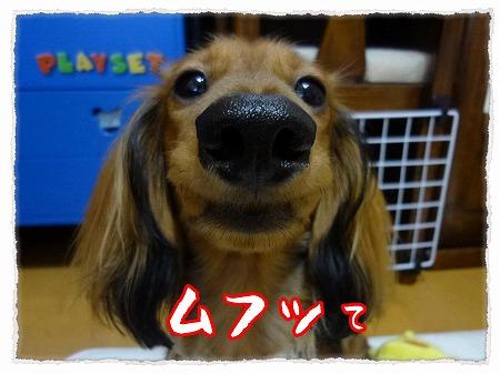 2012_9_28_7.jpg
