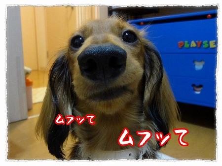2012_9_28_8.jpg