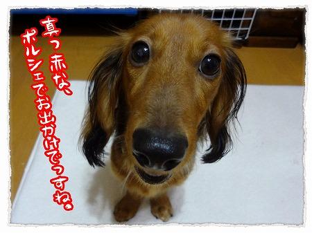 2012_9_29_1.jpg