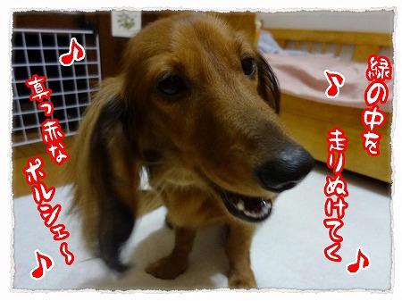 2012_9_29_2.jpg