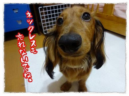 2012_9_29_4.jpg