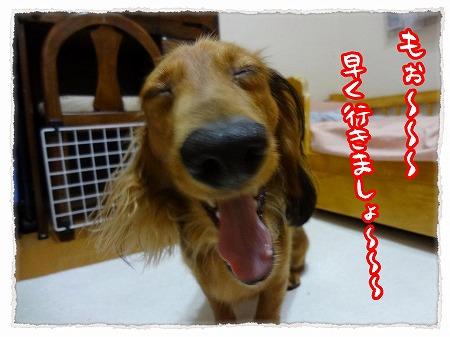2012_9_29_5.jpg
