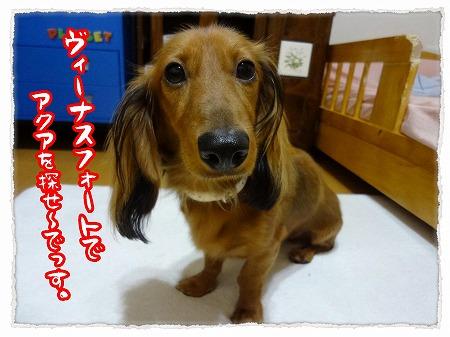 2012_9_29_7.jpg