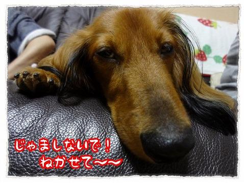 2012_9_30_3.jpg