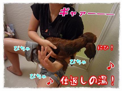 2012_9_3_7.jpg