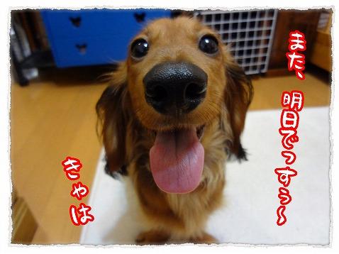 2012_9_6_4.jpg