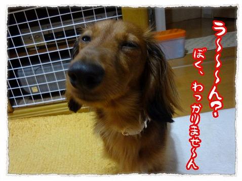2012_9_7_3.jpg
