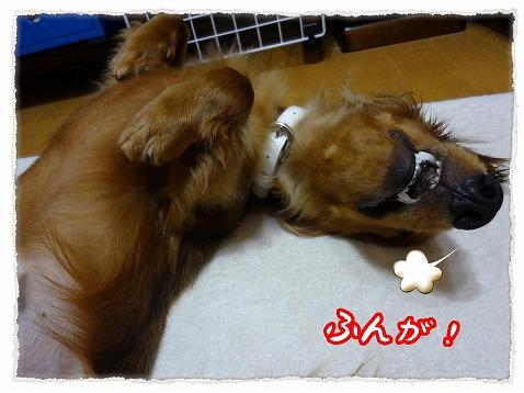 2012_9_7_5.jpg