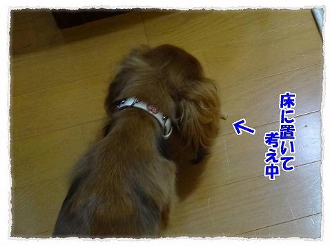 2012_9_8_2.jpg