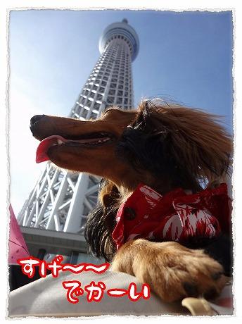 2012_9_9_11.jpg