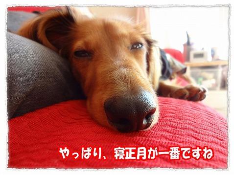 2013_1_1_4.jpg