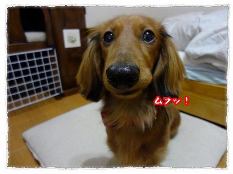 2013_1_23_1.jpg