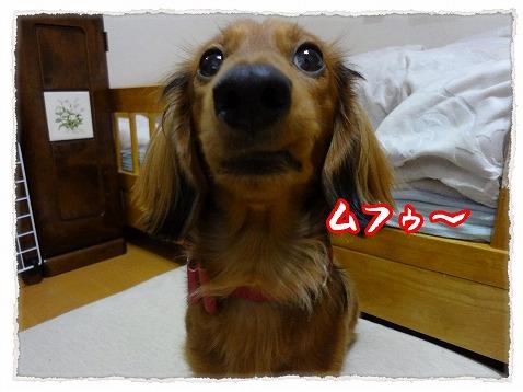 2013_1_23_3.jpg