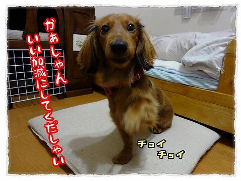 2013_1_23_5.jpg