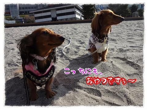 2013_1_25_4.jpg