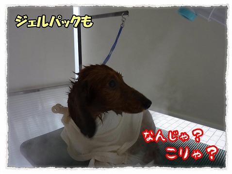 2013_1_27_4.jpg
