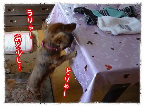 2013_1_28_3.jpg