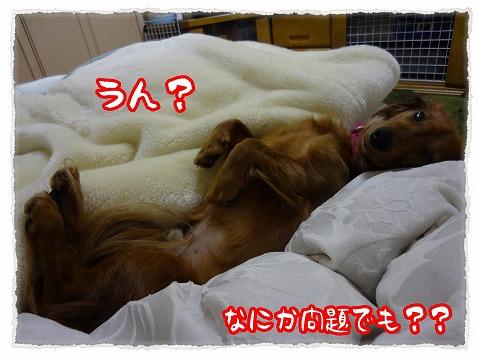 2013_1_31_4.jpg