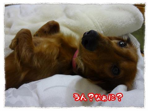 2013_1_31_5.jpg