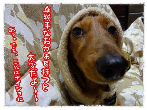 2013_1_4_1.jpg