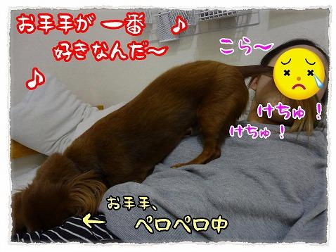 2013_2_11_3.jpg
