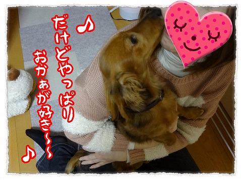 2013_2_11_4.jpg