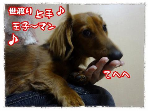 2013_2_11_5.jpg