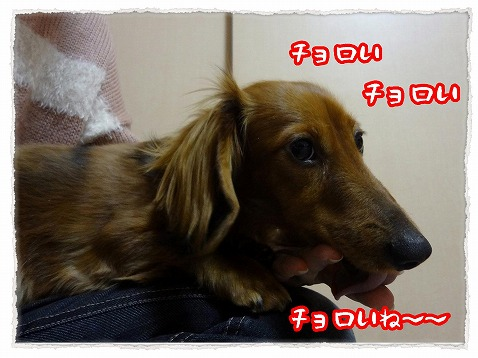2013_2_11_6.jpg