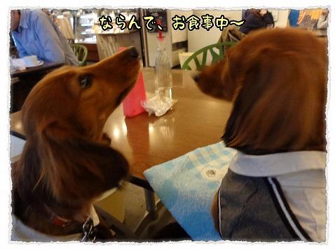 2013_2_17_5.jpg