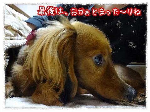 2013_2_19_5.jpg