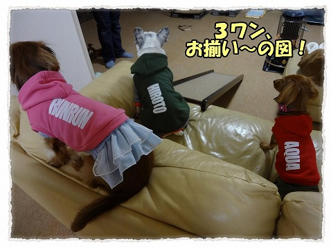 2013_2_20_2.jpg