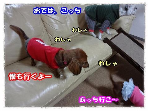 2013_2_20_3.jpg