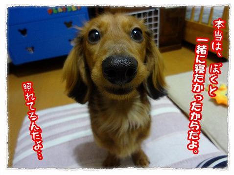 2013_2_21_2.jpg