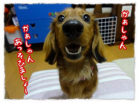 2013_2_23_1.jpg