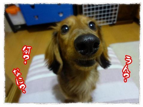 2013_2_23_2.jpg