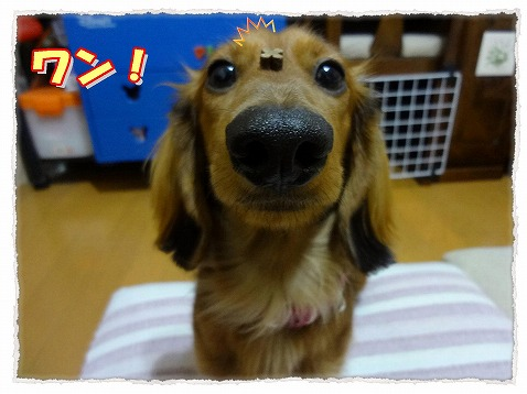 2013_2_23_3.jpg