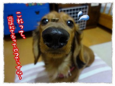 2013_2_23_6.jpg