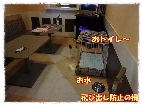 2013_2_25_2.jpg