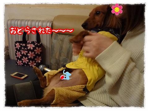 2013_2_25_8.jpg
